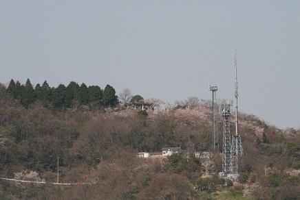 大空山桜40812S13