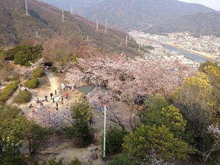 大空山桜40812S19