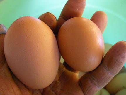 100117卵