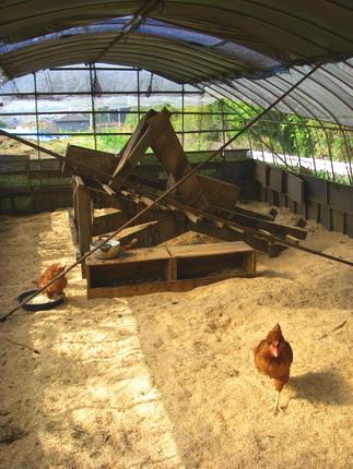 100505鶏ハウス3