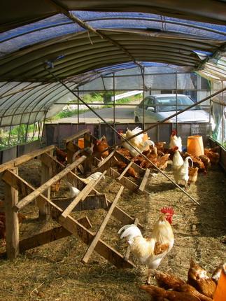 100505鶏ハウス2