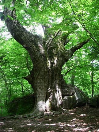 100530大木