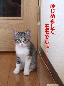 2009_10030024モモ