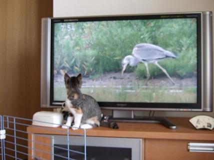 2009_10180012テレビ4