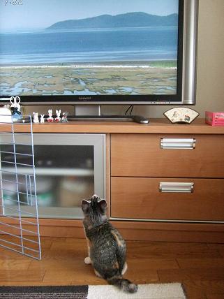 2009_10180008テレビ