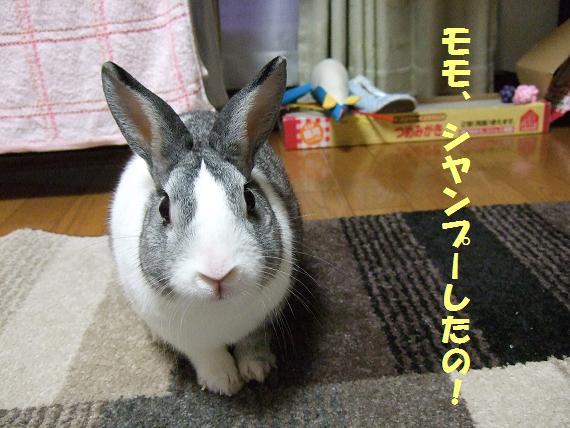 2009_10260068しやんぷー6