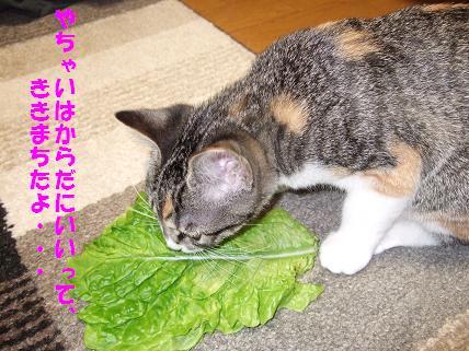 2009_10260017野菜
