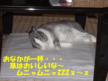 2009_11300009草5