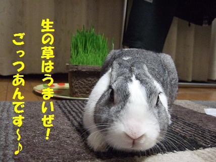 2009_11300020草4