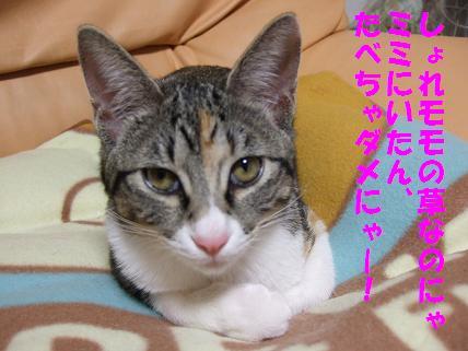 2009_11300024草5
