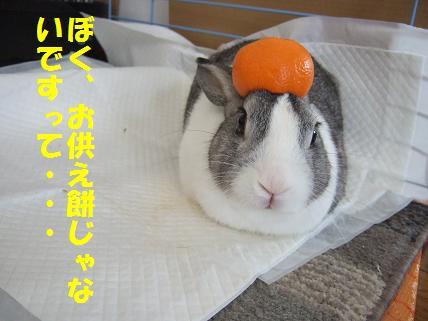 2010_01010023年賀2