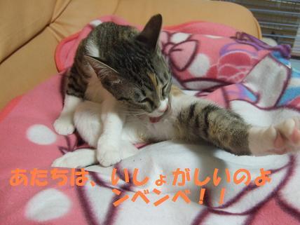 2010_01060033みみ7