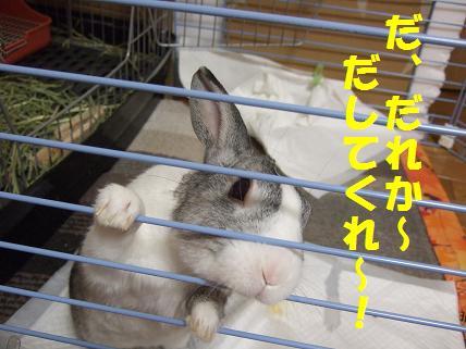 2010_01050003みみ2