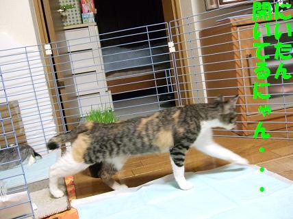 2010_01060067みみ4