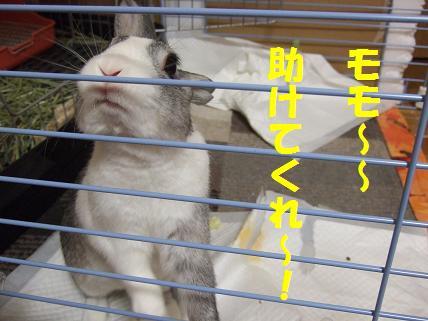 2010_010500みみ