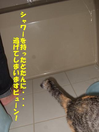 2010_02050016お風呂5
