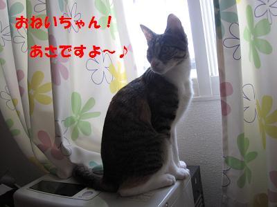 2010_03170040朝