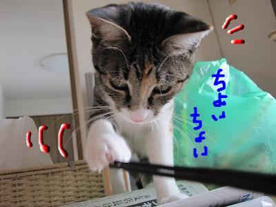 snap_kei3977_201040142421.jpg