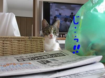 snap_kei3977_20104017421.jpg