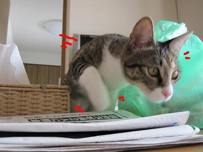 snap_kei3977_20104018227.jpg