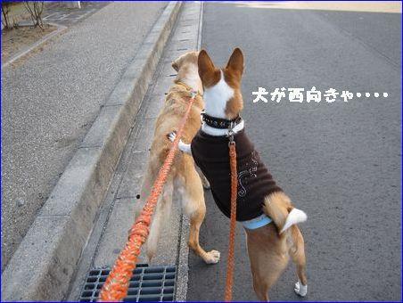 遠州のからっ風はすごい!
