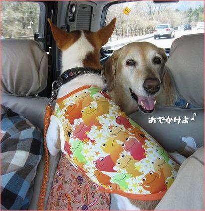 おなじみの車の中。