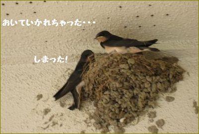いつの間にか2羽いなくなりました。