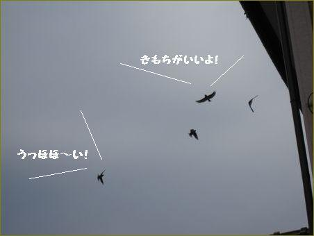 今日は曇り空。