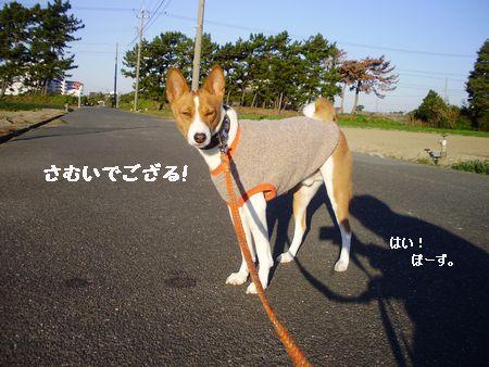 かたまる犬!