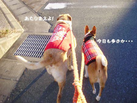 散歩は普通は歩きです。