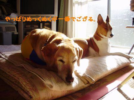 明日は忘年会よ!