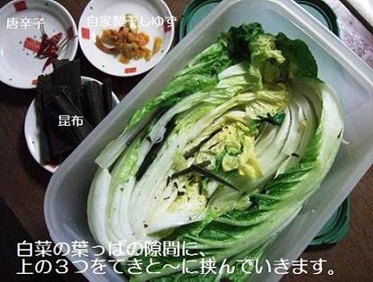 白菜挟みます