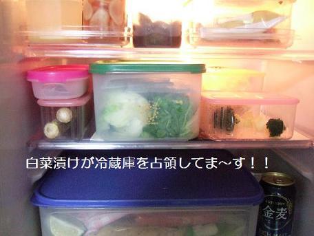 白菜漬け冷蔵庫へ