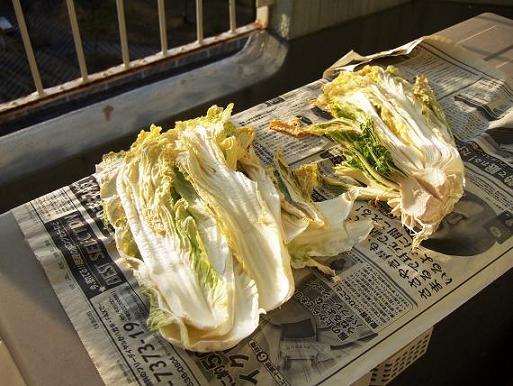 忘れ去られた白菜たち