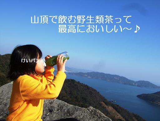山頂野生類茶