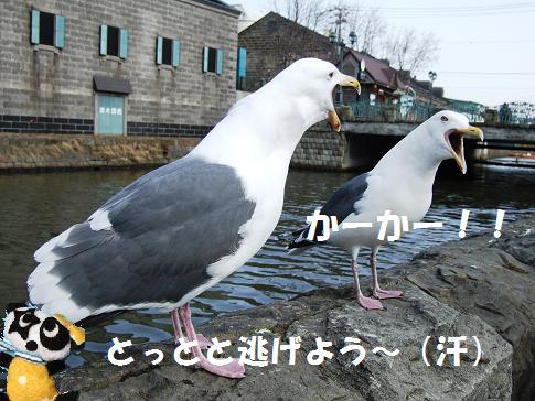 小樽運河かもめ