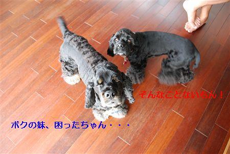 2010_05 028_R