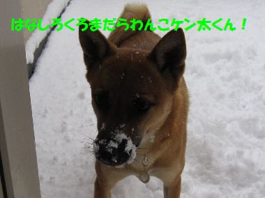 yukikonnko5