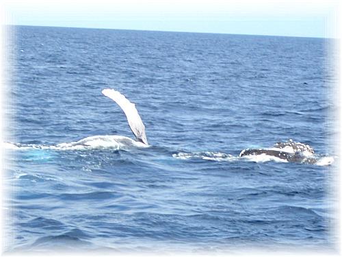 CIMG1391クジラ2頭