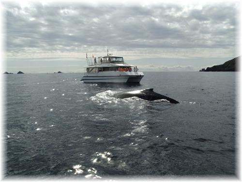 R0012866 クジラ&ボート