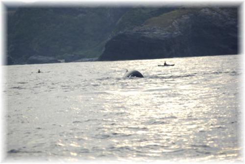 _IGP0975 クジラ&カヤッカー