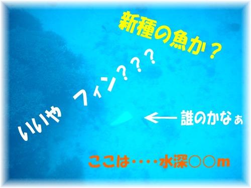 DSC07493 フィン?