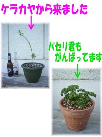 P2240287.mix何の花?