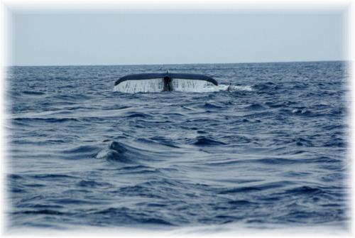IMGP0013.mix 親子クジラ