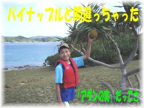 P3260528.mix パイナップル?