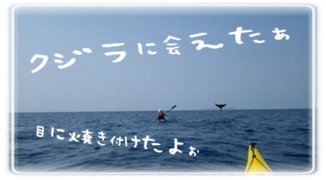カヤックでクジラ