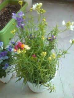 111207_きれいな花