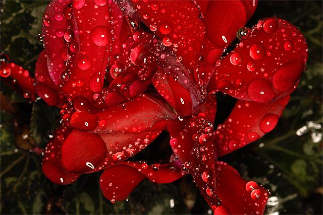 090115_002_濡れた花