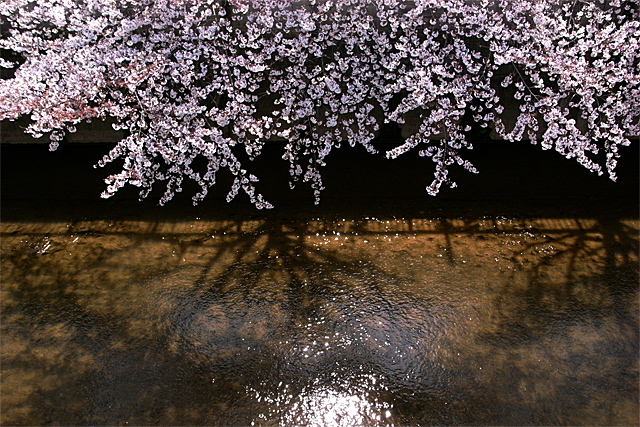 090329_001_桜_石神井川