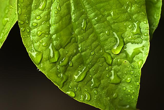 090508_001_花水木の葉